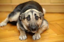 Как собаки помогают выявить рак