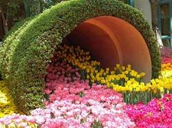 Италия готовится к всплеску тюльпанного цветения