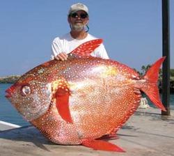 Учёные обнаружили первую теплокровную рыбу