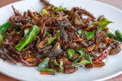 Ученые советуют людям полюбить блюда из насекомых