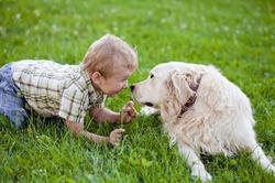 Домашние животные помогают снизить риск астмы у детей