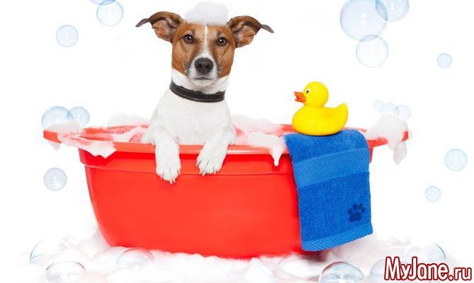 О чем стоит знать перед тем, как завести домашнее животное?