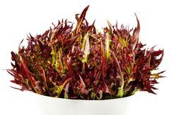 Блюда от старости: что приготовить из листьев салата?