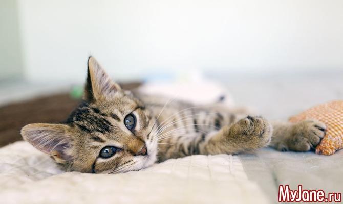 Кошки, наши пушистые любимцы