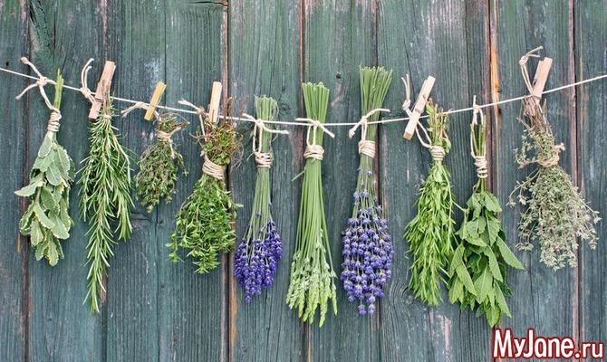 Целебные травы: собираем и сушим сами
