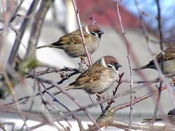 Осенние пташки