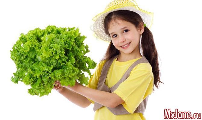 Зелень круглый год: выращиваем листья салата