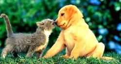 Кто любит человека больше - кошки или собаки?