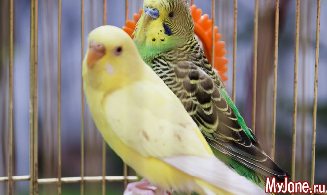 38 попугаев: как выбрать домашнего питомца?