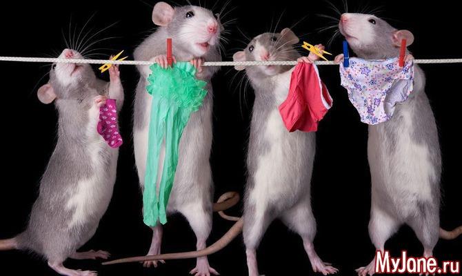 Вы что-то слышали о крысах? Забудьте! Ч. 1