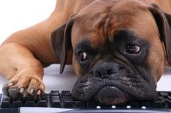 Глобальное потепление вызывает депрессию у собак