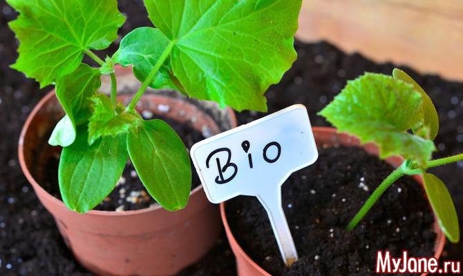 10 полезных советов или лайфхаков для огородника