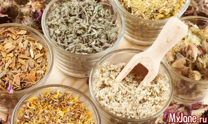 Адаптогены: травы для похудения и снятия стресса