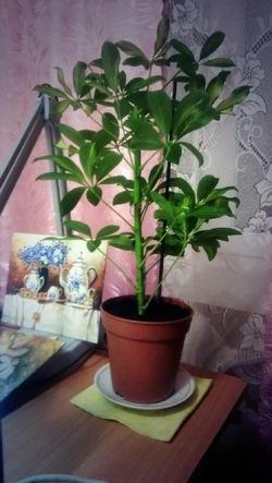 Зеленые друзья или коварные враги? «Вредные» растения в доме