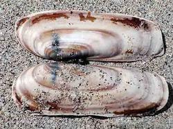 Чудесные ногти русалки