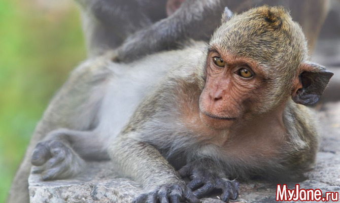 2 октября праздник бога обезьяны