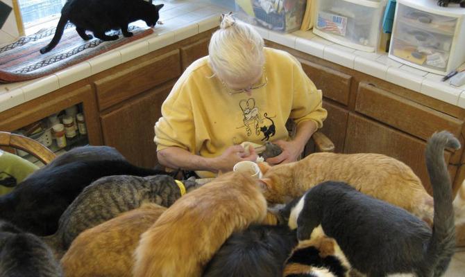 Animal Hoarding: любовь? Нет, болезнь!