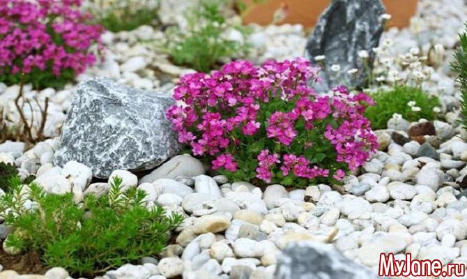 Рокарий на даче: «родственник» альпийской горки и японского сада камней