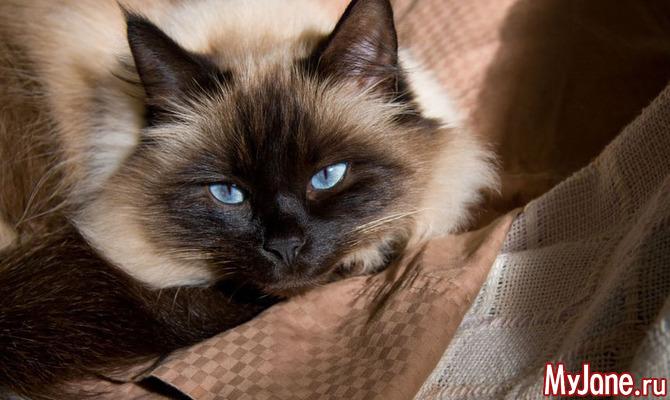 Кошки: самые любимые породы