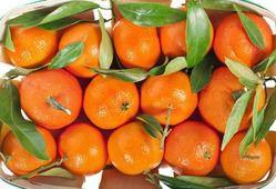 Роспотребнадзор рассказал, как выбрать мандарины к новогоднему столу