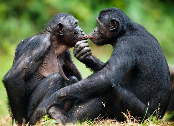 Сайты секса с обезьяной