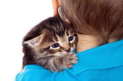 В организме кошек накапливается вредный химикат