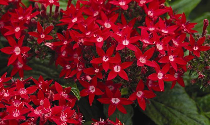 Садовая арка для цветов на даче своими руками: делаем
