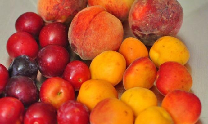 Сливовые абрикосы, абрикосовые сливы