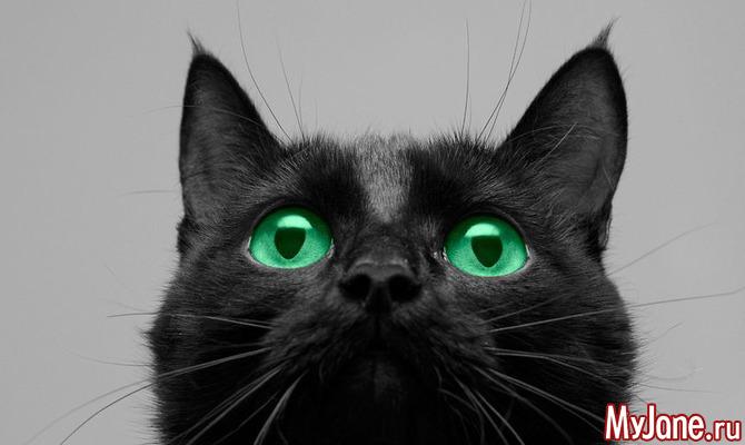 17 ноября - День чёрного кота