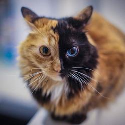 Самая загадочная кошка в мире