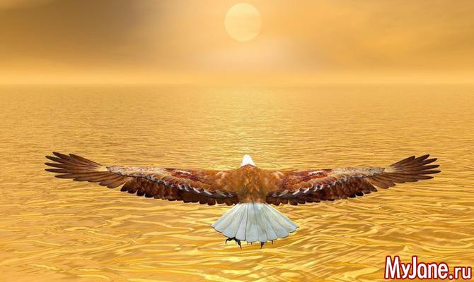 Высоко парящий орёл