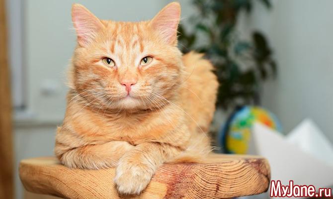 О чем хочет рассказать ваша кошка