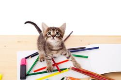 Как отучить кошку прыгать на стол