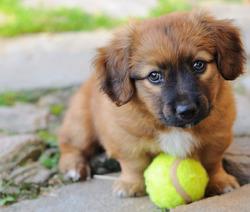 Владельцев домашних животных заставят платить налог