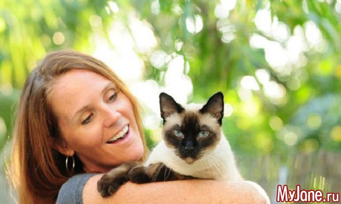 Кошки: о сиамах и не только...