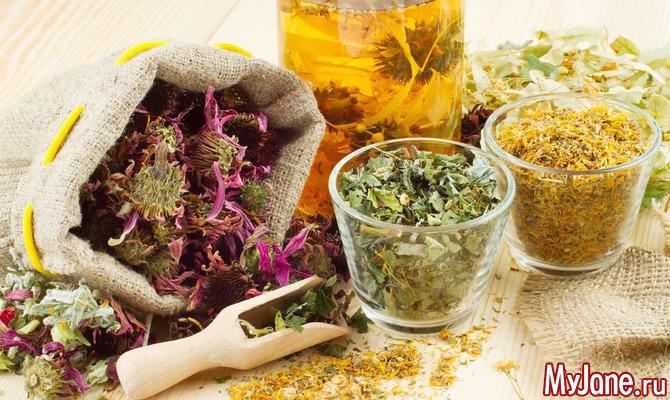 Какие лекарственные растения заготовить в августе?