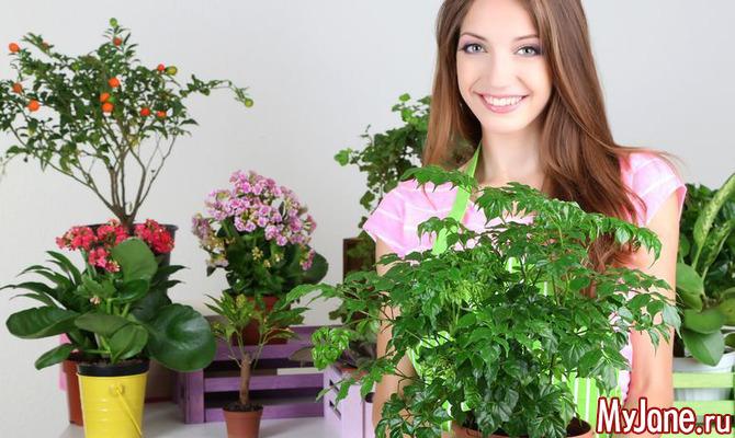 Комнатные растения в доме: красота или опасность?