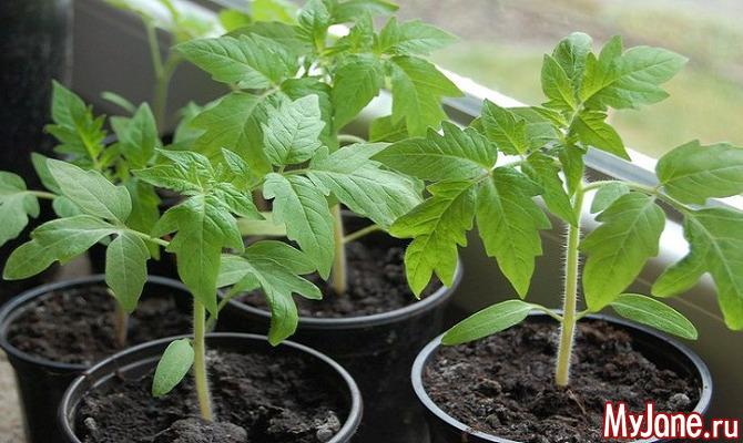 Пора высаживать семена на рассаду... Куда?! (Часть 1)
