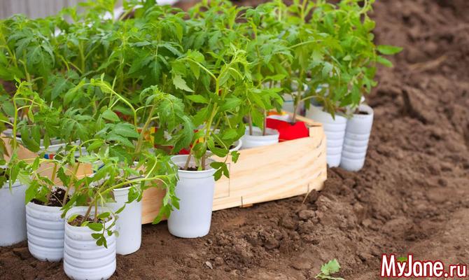 Пора высаживать семена на рассаду... Куда?! (Часть 2)