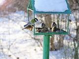 Чем нельзя кормить птиц зимой