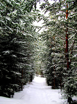 Как же я всё-таки люблю зиму…