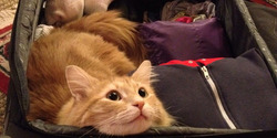 Оригинальный флешмоб: котики тоже хотят в отпуск