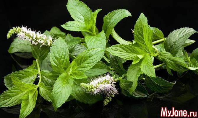 10 свойств мяты, полезных для здоровья