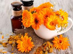 Как цветы календулы помогут убрать прыщи на лице