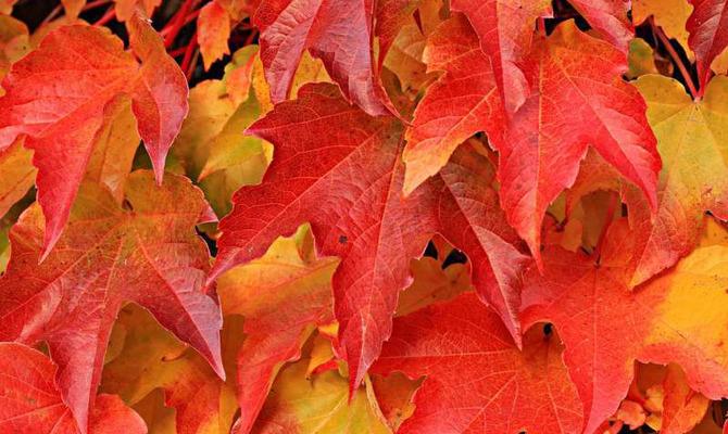 Золотая осень: декор для дома своими руками