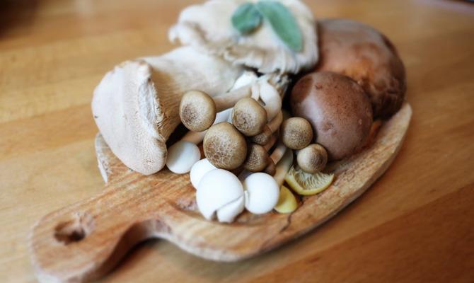 Урожай лесных даров: вкусные блюда из грибов