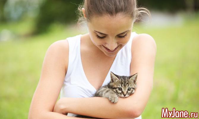 Друг о четырех лапах: как выбрать здорового котенка