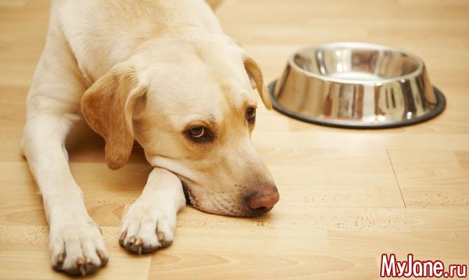 Несладкая сладкая жизнь: чем опасны лакомства для кошек и собак