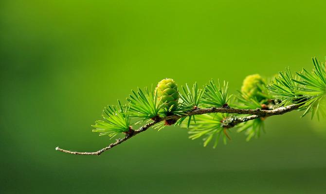 Царство Зелёного цвета