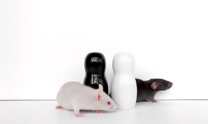 Год Белой Крысы. 2020